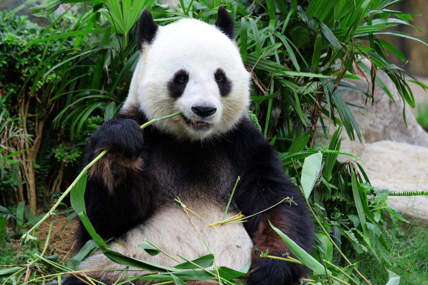 African Rainforest Plants List http://www.grosser-pan...